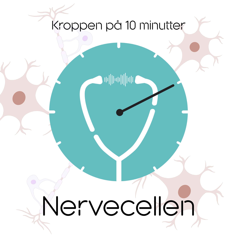 Nervecellen på 10 minutter